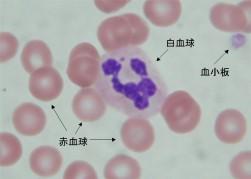 写真 血球算定